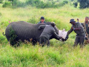 Build it help safeguard rhino